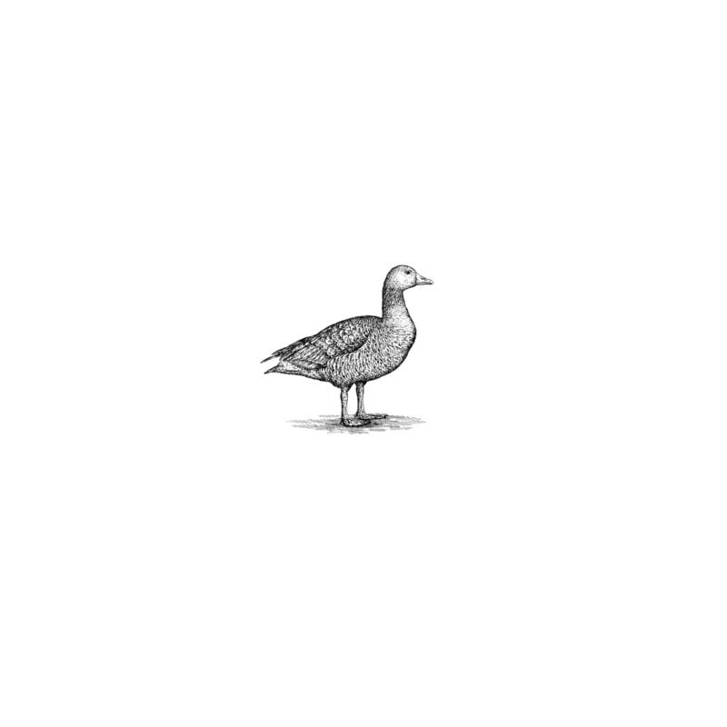 Gartmorn Farm Duck